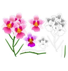 vanda miss joaquim orchid outline vector image