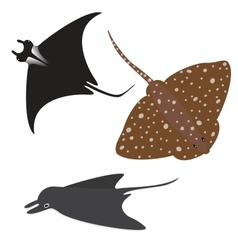 Stingray set vector