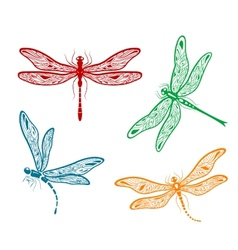 Pretty dainty dragonfly designs vector
