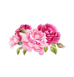 watercolor roses composition vector image vector image
