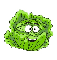 Fresh green leafy cabbage vegetable vector