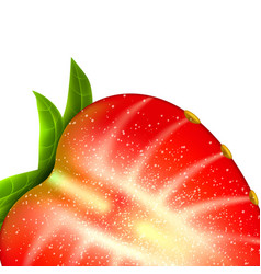 Realistic detailed strawberry closeup vector