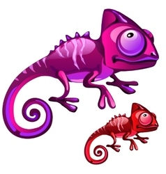 Two cartoon iguanas in red and purple color vector image vector image