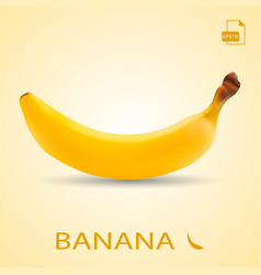 single fresh banana fruit isolated on a background vector image vector image