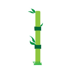 isolated bamboo stick vector image
