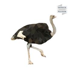 Ostrich polygon vector