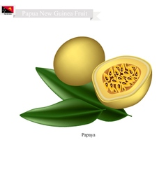 Passion fruit a popular fruit in papua new guinea vector