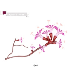 Qataf Flower The National Flower of Qatar vector image vector image