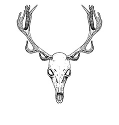Sketch deer skull vector