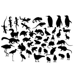 Little and Cute Animals vector image