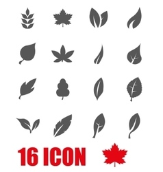 grey leaf icon set vector image