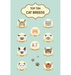 Pastel top ten cat breeds poster vector