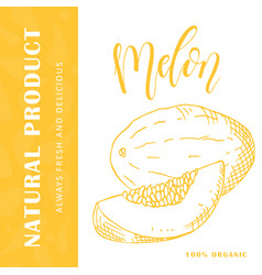 Food design with fruit hand drawn sketch of melon vector