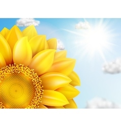 Sunflower with blue sky - autumn eps 10 vector