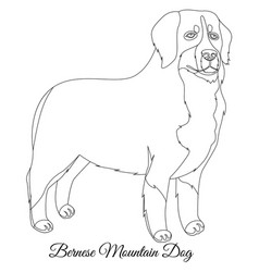 Bernese mountain dog outline vector