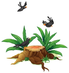 Black Birds Around Stump vector image