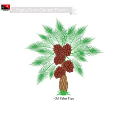 Coconut tree a native tree of papua new guinea vector