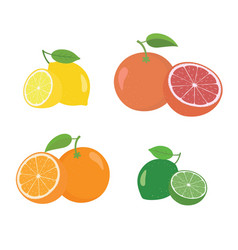 fresh citrus fruits whole and halves 4 icons vector image