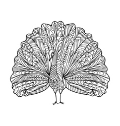 Peacock bird coloring book for adults vector image