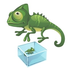 Green iguana and one frozen in the ice vector image