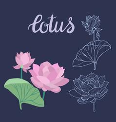beautiful lotus flowers symbol design element vector image vector image