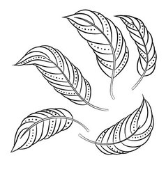 Feathers- vector image vector image