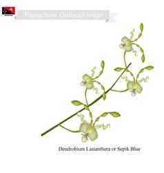 Dendrobium Lasianthera Papua New Guinea Flower vector image