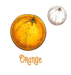 Orange fruit sketch isolated icon vector