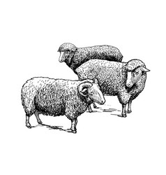 flock of sheep vector image vector image