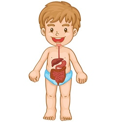 Little boy and digestive system vector