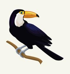 toucan exotic tropical bird vector image
