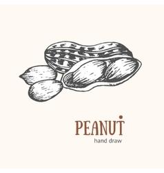 Peanut Card Hand Draw Sketch vector image vector image