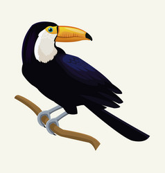 toucan exotic tropical bird vector image