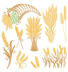 Design elements corn grain vector