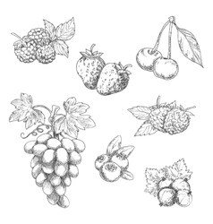 Flavorful fresh garden fruits with leaves sketches vector image vector image