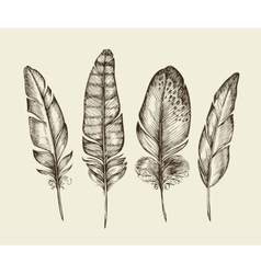 Hand drawn vintage bird feathers Sketch writing vector image vector image