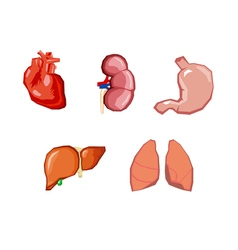Human organs internal organs set human anatomy vector