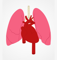 lung and heart vector image
