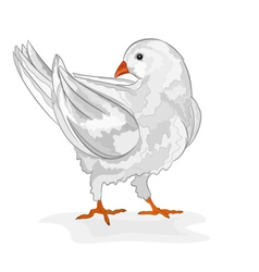 Pigeon white bird white dove symbol peace vector image vector image