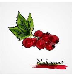 redcurrant vector image vector image
