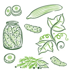 food cucumbers vector image