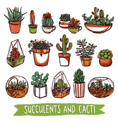 Succulents and cacti color sketch set vector