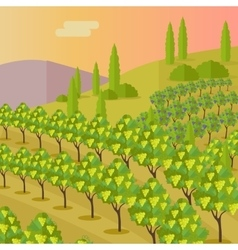 Rural landscape with vineyard vector