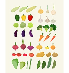 Set of fresh vegetables isolated carrot and vector