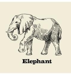 Hand drawn elephant vector