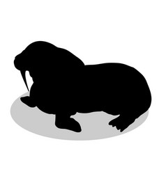 walrus arctic black silhouette animal vector image vector image