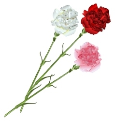 Bouquet of white pink and red carnations vector