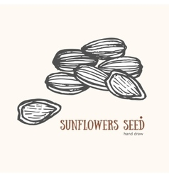 Sunflower seeds card hand draw sketch vector