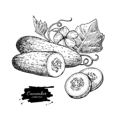 Cucumber hand drawn  isolated cucumber vector
