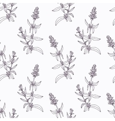 Hand drawn hyssop branch outline seamless pattern vector